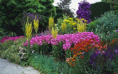 Vaste online planten kopen