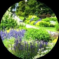 tuinplanten online groei in schaduw